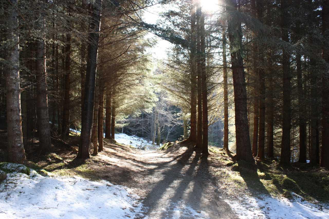 Strathpeffer Woods
